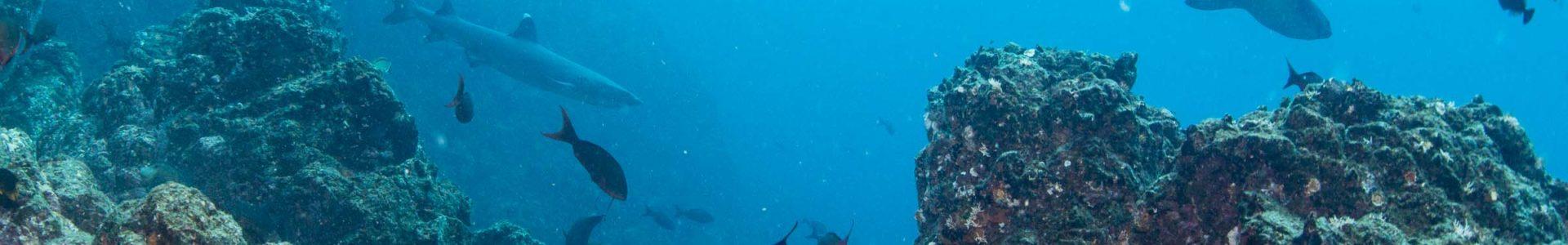 Environmentally Responsible Marine Tours