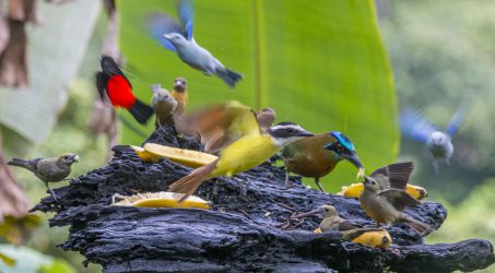 The Green Big Year Costa Rica: A Couple of Birders