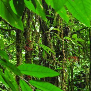 Corcovado National Park La Leona