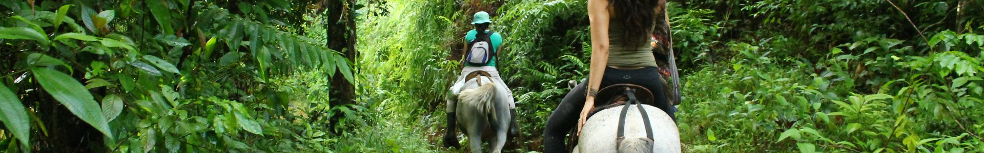 Horseback Jungle Tour