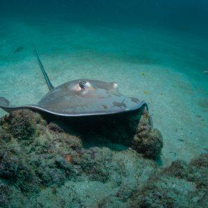 Isla Del Cano Diving