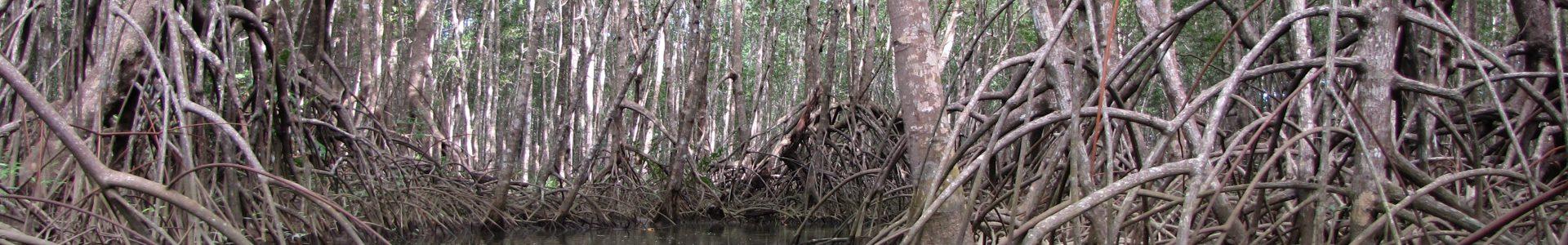 Sierpe Mangrove Tour