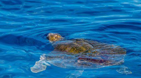 Volunteers Needed: Life for Life Sea Turtles